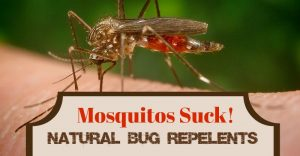 Mosquitos Suck: Natural Bug Repellents